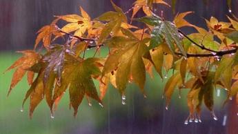 autumn rain on leaves